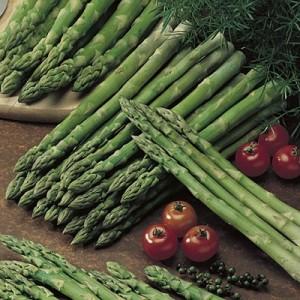 asparagusjerseyknight